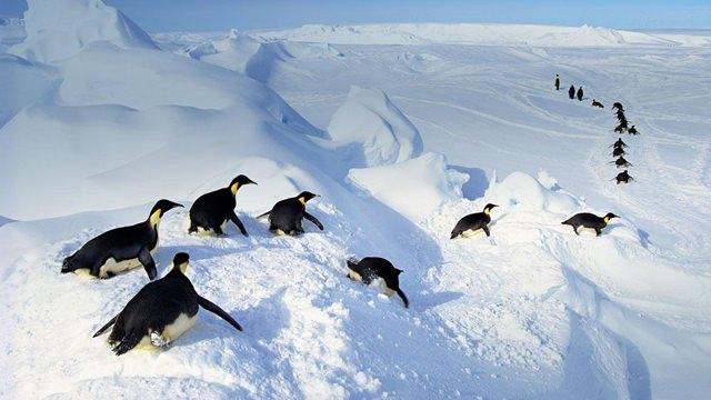 mistere antarctica