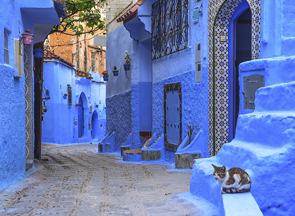 Street with stairs and kitty in Medina of Chefchaouen, Morocco.