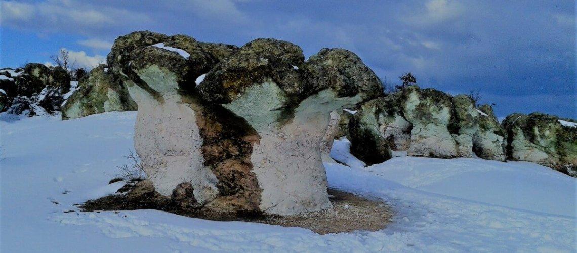 The Stone Mushrooms & The Petrified Wedding