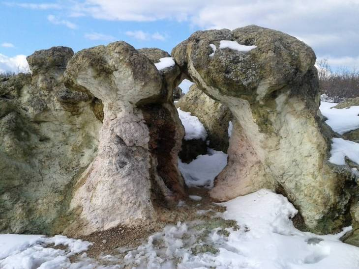 The Stone Mushrooms & The Petrified Wedding
