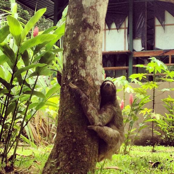 wild sloths costa rica