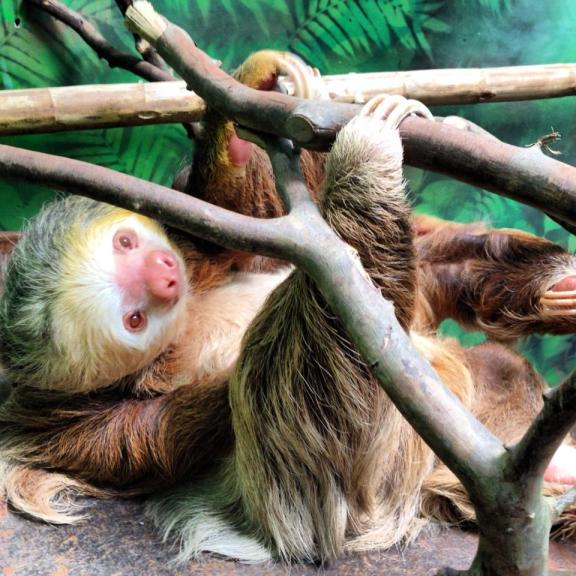 johnny depp sloth