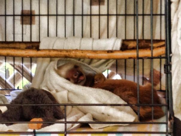 visit baby sloths in costa rica