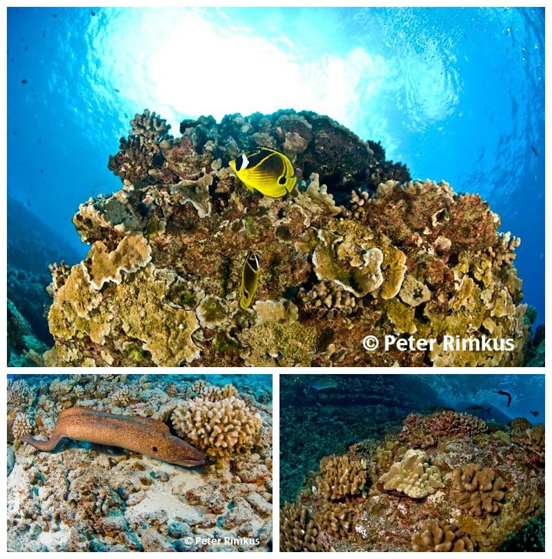 ocean photography maui hawaii