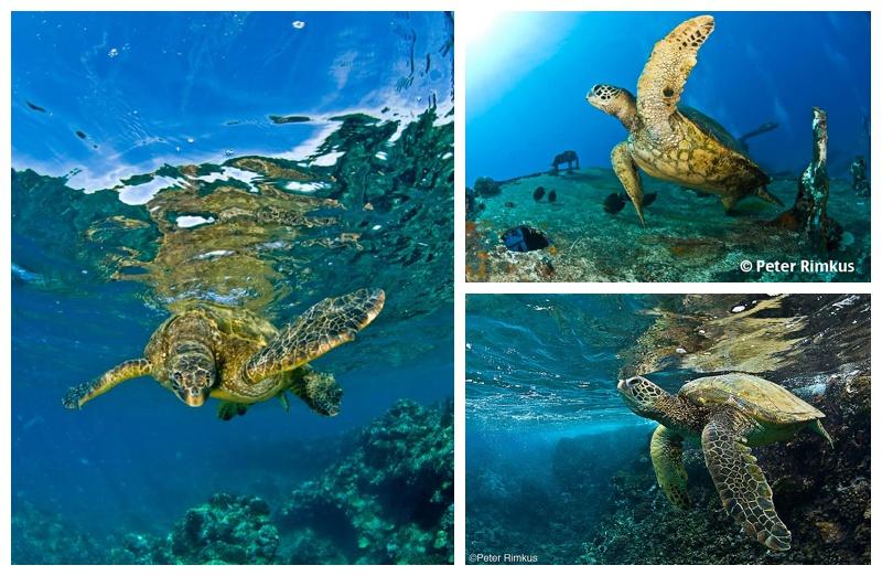 turtle town maui photos
