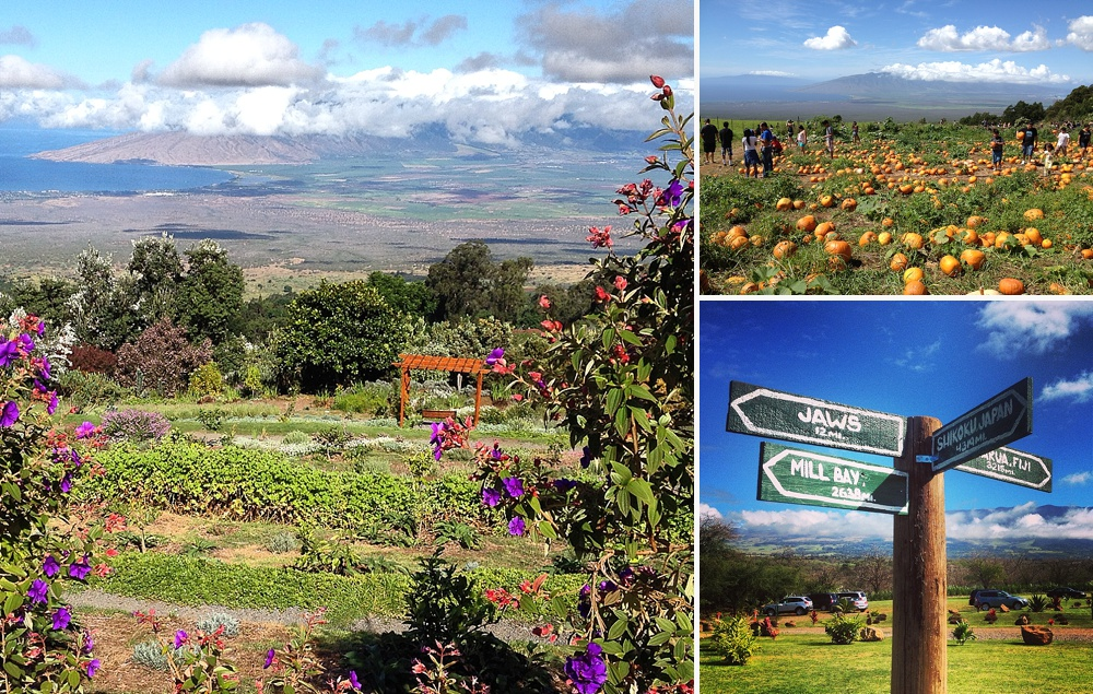 living in upcountry maui