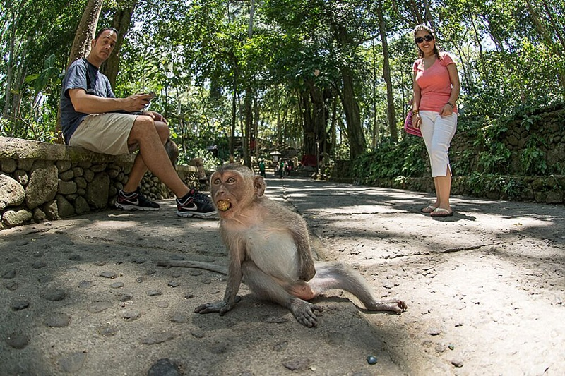 Visiting Bali's Sacred Monkey Forest