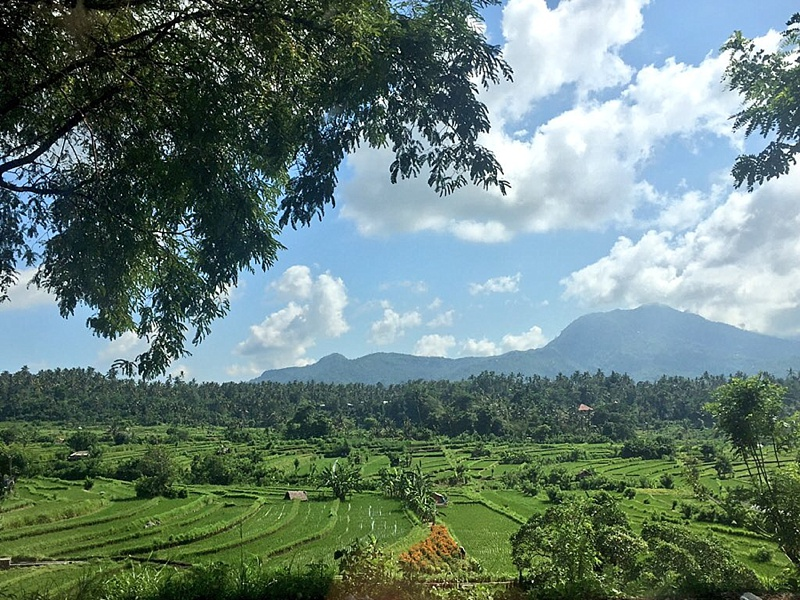 amed bali things to do