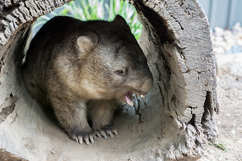 koala sanctuary brisbane