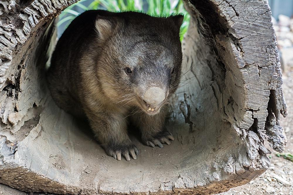 see australia wildlife