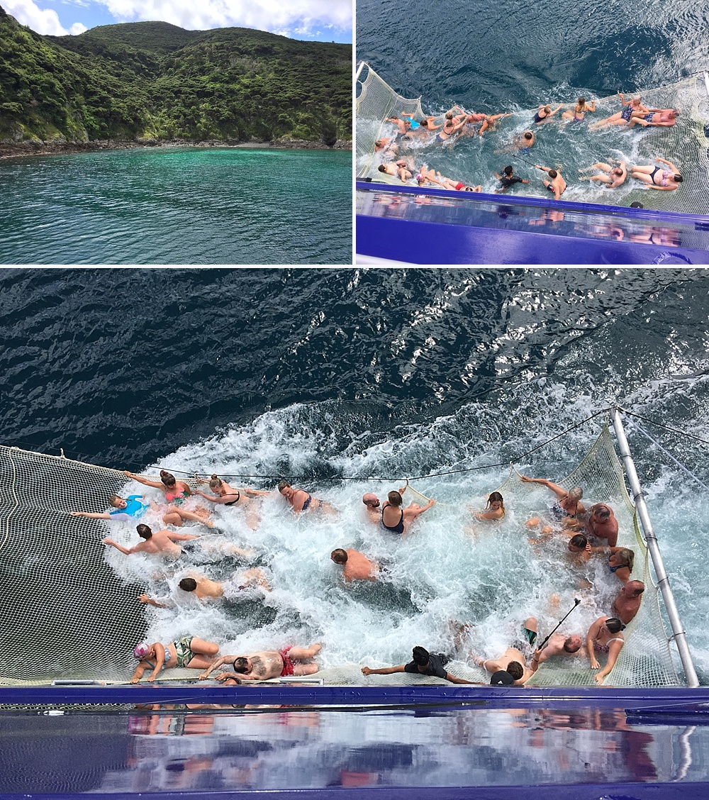 snorkel with dolphins bay of islands