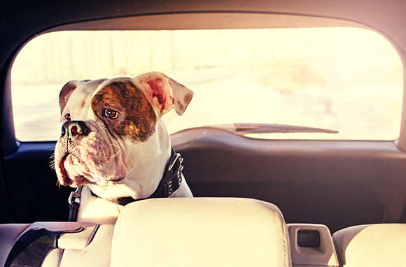 How to Travel with Your Pet