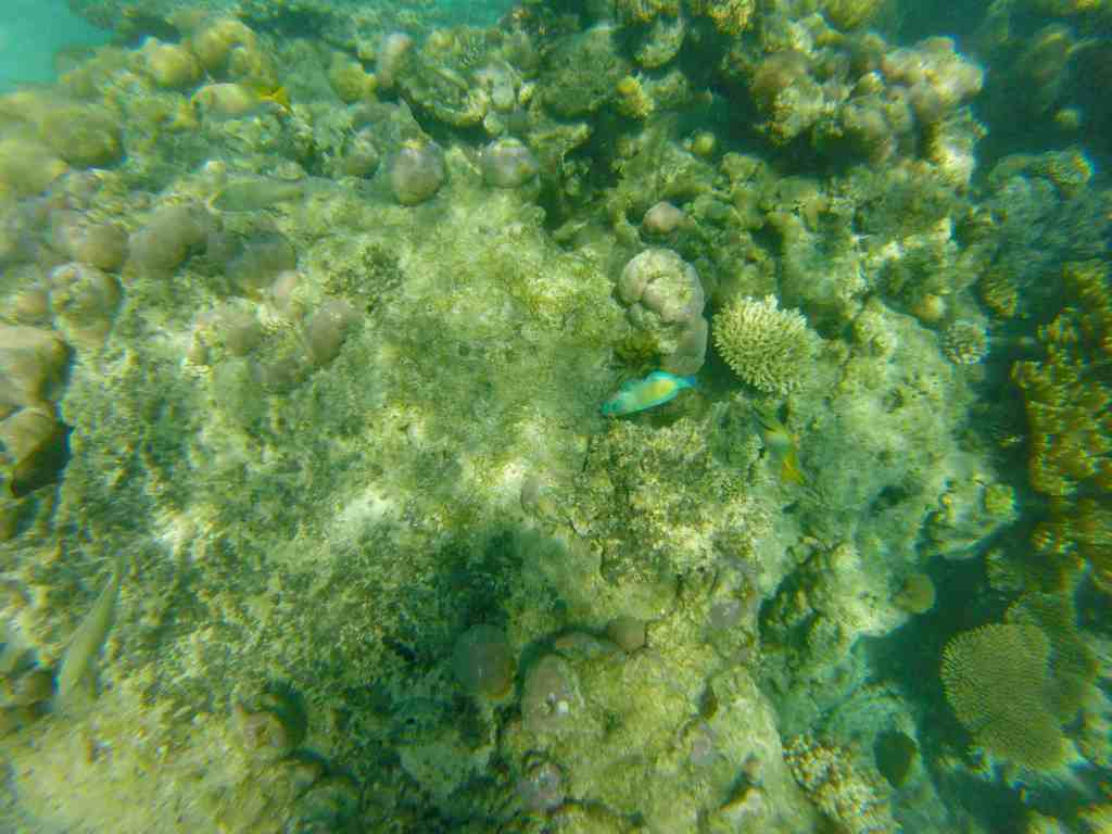 Fish in Great Barrier Reef