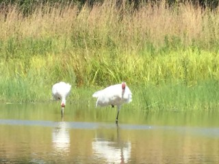 The International Crane Foundation - a legacy