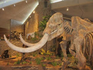 Mastodon Historic Site a human discovery