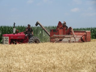 Wheat cutting Farmall 450 style