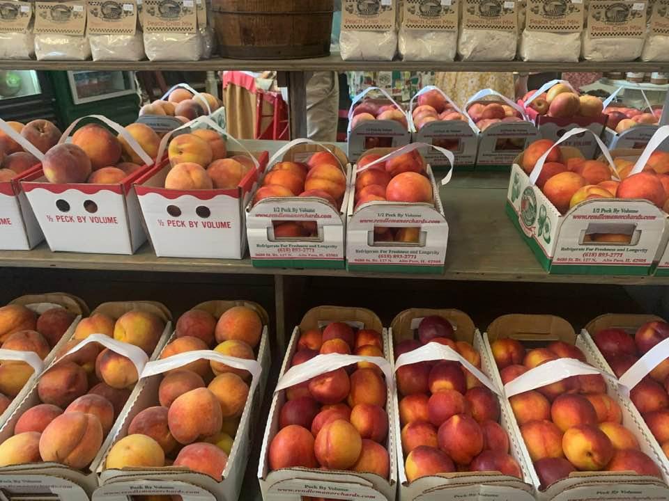 Rendleman orchards