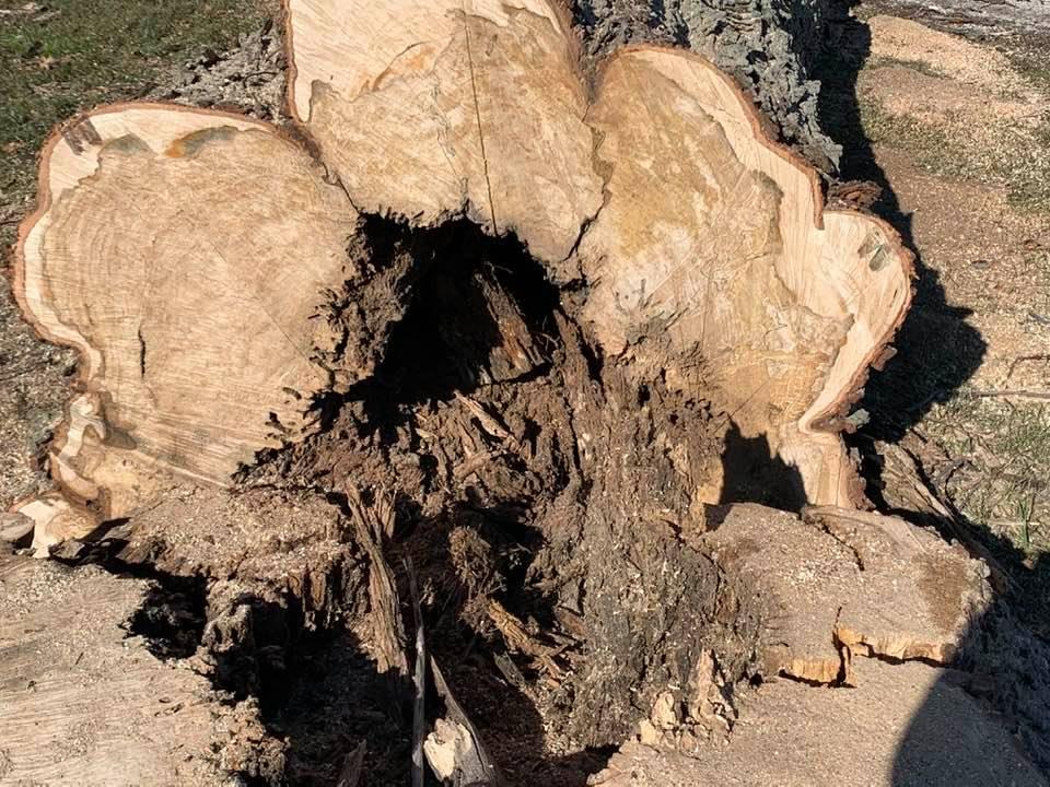 Varmint Tree