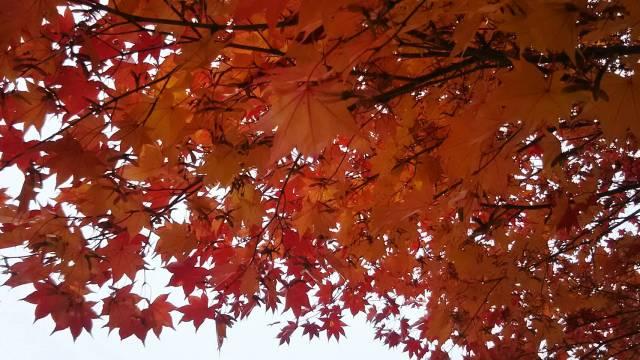 富良野で見られる素敵な景色!紅葉シーズン
