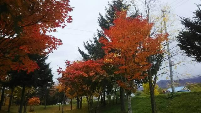 富良野!紅葉シーズンも素敵です!