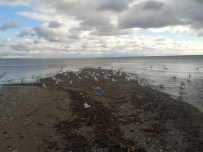The Gulls were having a field day until I disturbed them