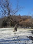 An odd and beautiful tree