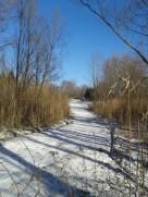 Path of long vines