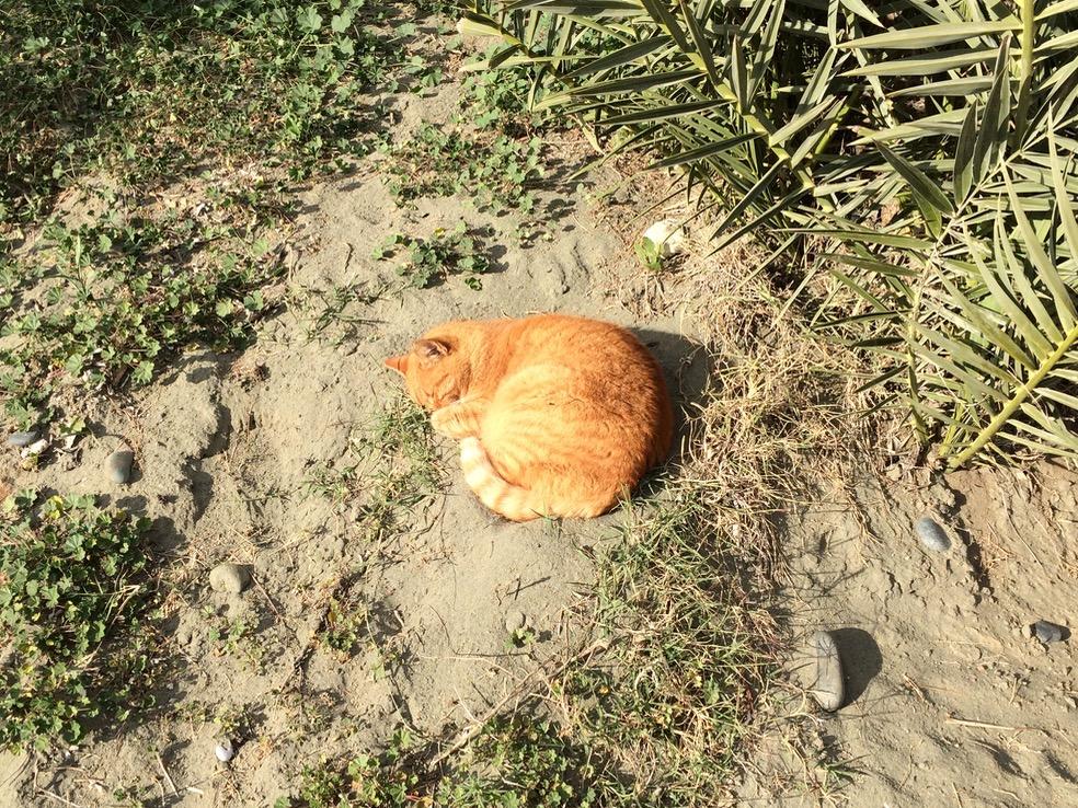 Cats of Limassol