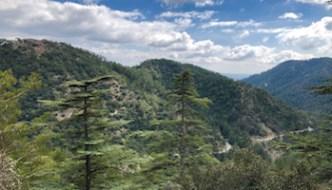 Cedar Valley, An Emerald Heart Of The Paphos Forest