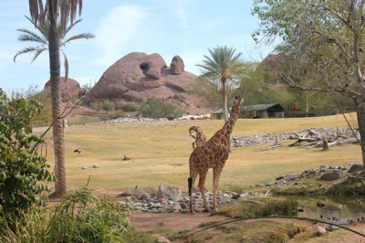 """Image result for phoenix zoo"""""""
