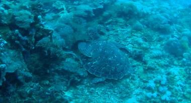 sea-turtle-3