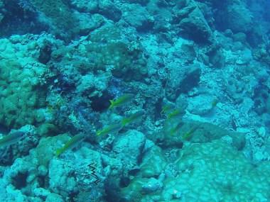 honeycomb reef