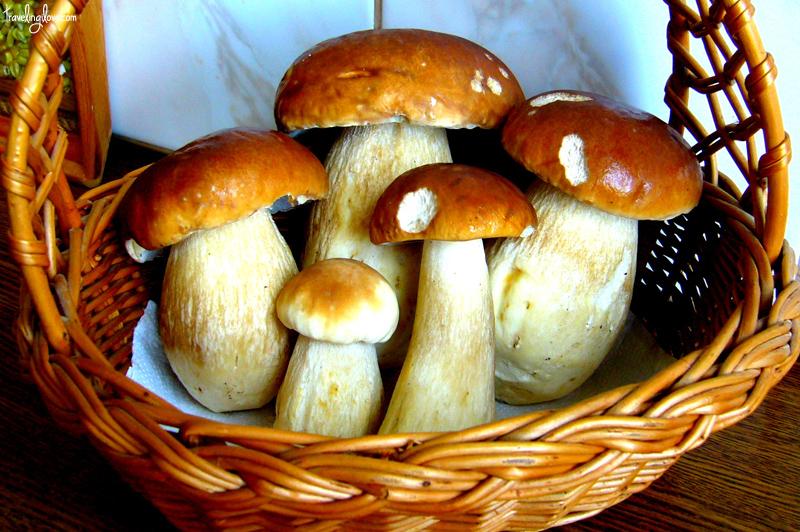 Boletus mushroom in a basket