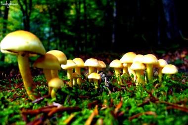 Inedible wild mushroom