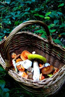 Mushrooming basket