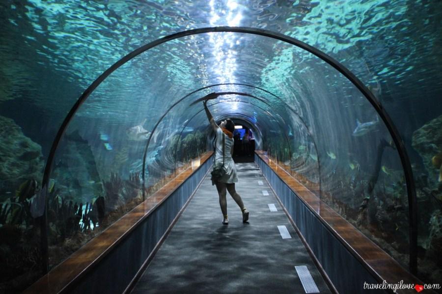 Loro Parque Aquarium