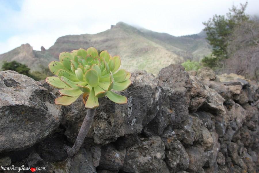 Santiago del Teide (6)