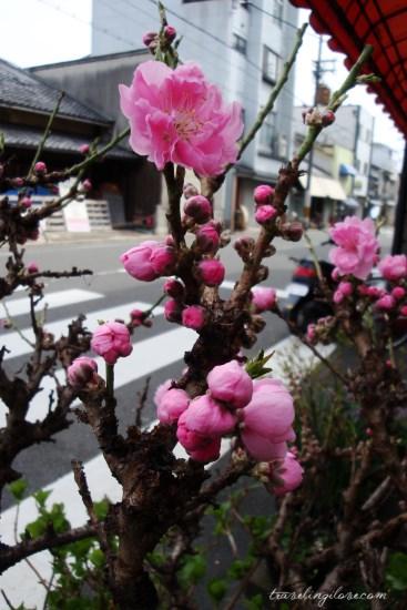 Nishijin, Kyoto (14)