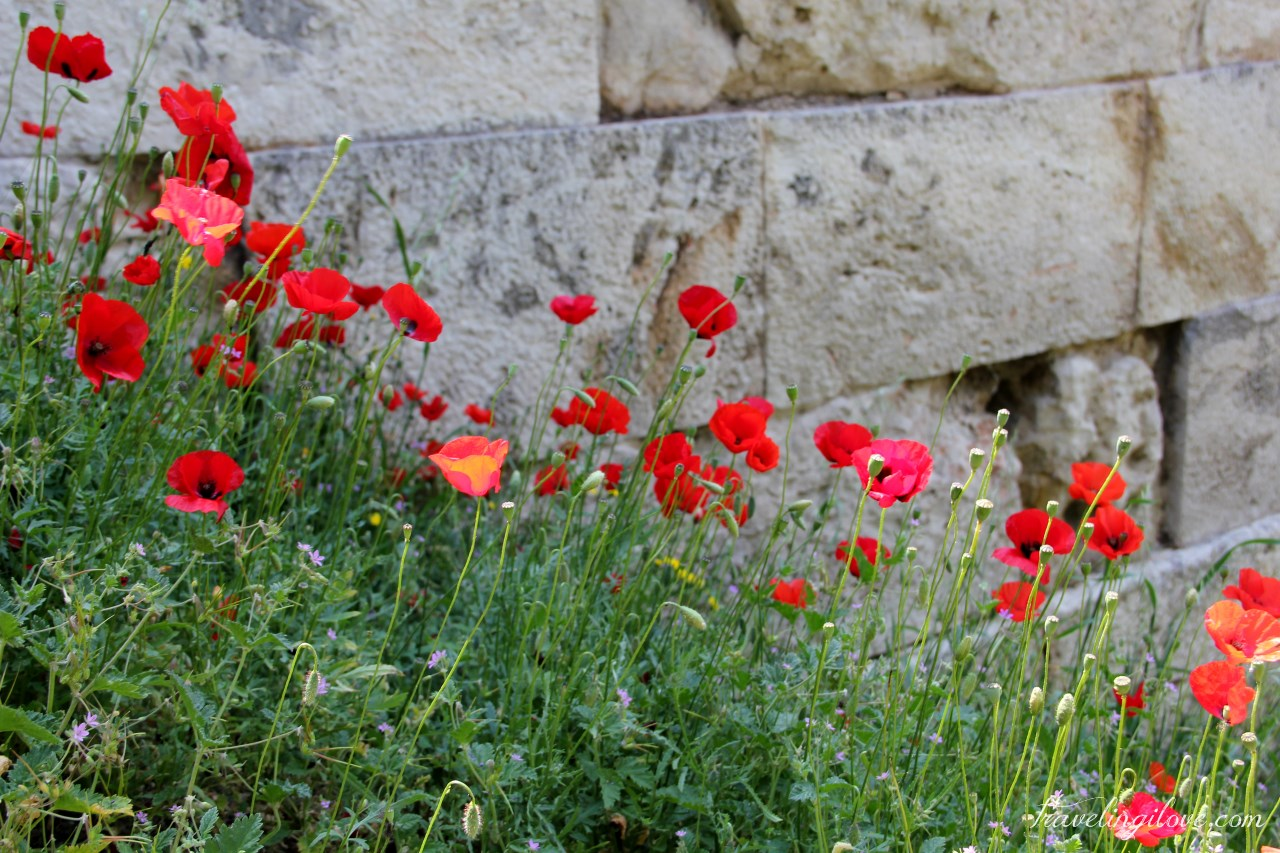 Ruins and poppies (1)