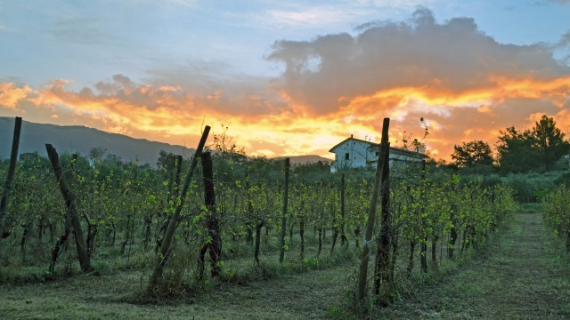 Vineyards at The Bakery in Sant'Agata de' Goti @travelingintandem