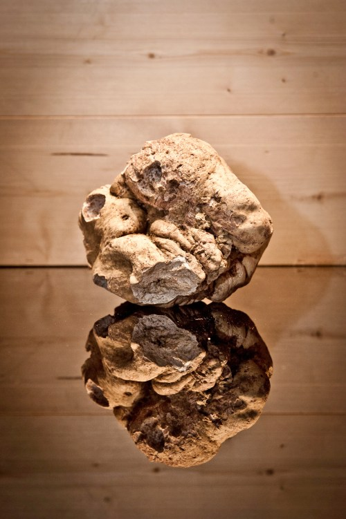 White Truffle from Alba, Italy