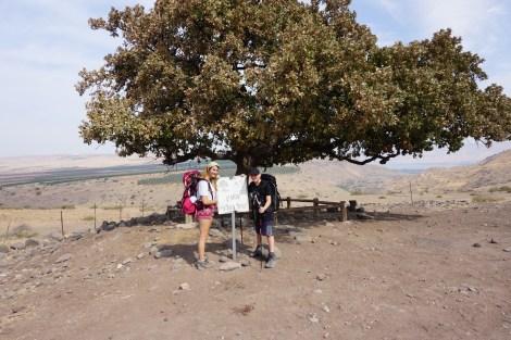 העץ של גולני