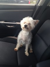 """""""Why am I in this car? I have better things to do."""""""