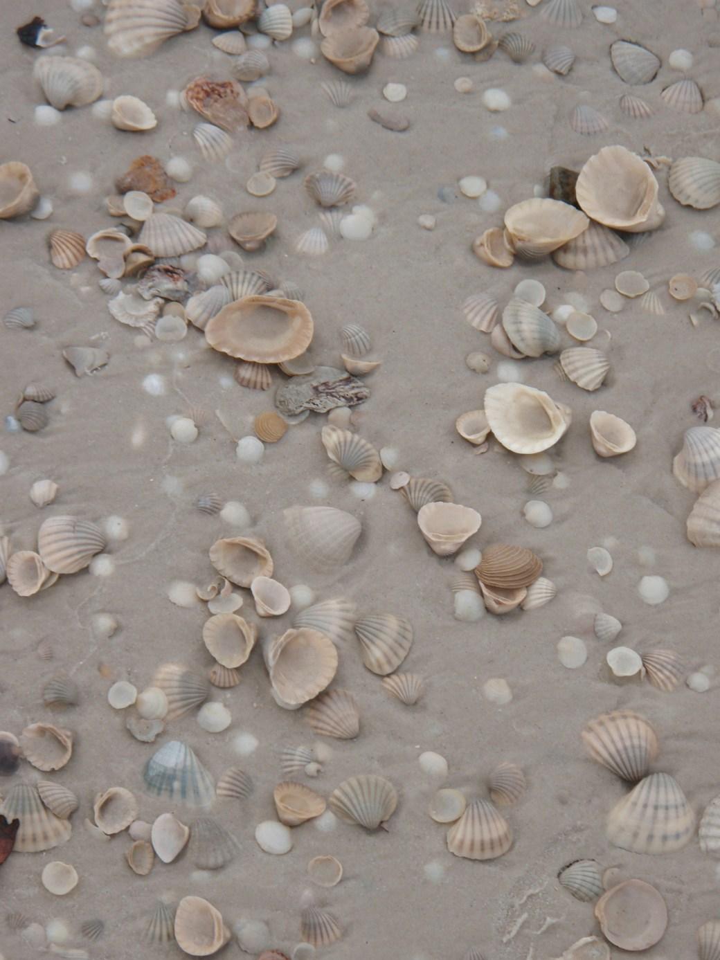 Shells on the Beach; Port Gentil, Gabon; 2010