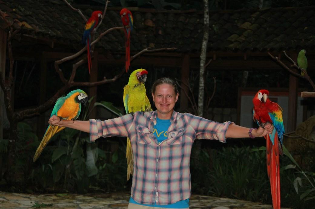 Parrot Mayhem; Copan, Honduras; 2013