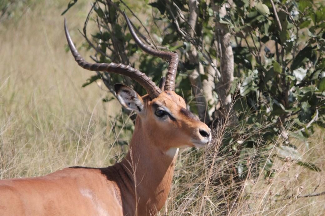 JRB @ Kruger National Park, SA; 2011 (1014)