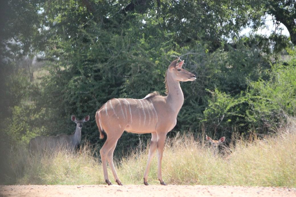 JRB @ Kruger National Park, SA; 2011 (1118)
