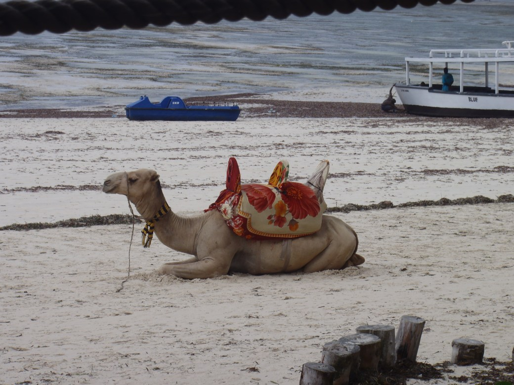 Camel on the Beach; Mombasa, Kenya; 2011