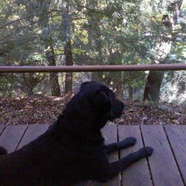Baxter the dog enjoying the deck