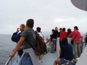 whale watching crowd